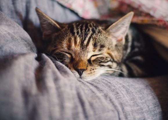 ストレス解消 猫