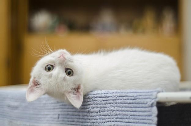 テレワーク 猫対策