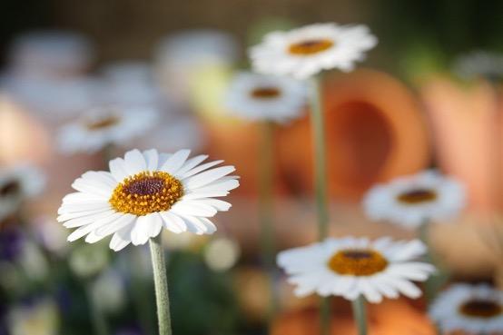 花の定期便 LIFFT 特徴